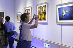 In the gallery, people visit bayberry festival underwater photography exhibition Royalty Free Stock Image