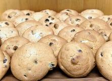 Galleta de las galletas con la pasa. Aún-vida Foto de archivo