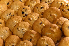 Galleta de las galletas con la pasa. Aún-vida en un día soleado Fotografía de archivo libre de regalías