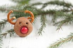 Galletas del reno de Rudolf de la Navidad Imagen de archivo libre de regalías