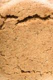 Galletas fondo, primer de la nuez del jengibre en parte delantera Imágenes de archivo libres de regalías