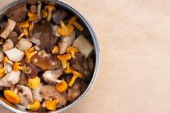 Galletti dei funghi e Porcini nitido Fotografia Stock Libera da Diritti