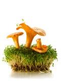 Galletti e crescione Fotografie Stock Libere da Diritti