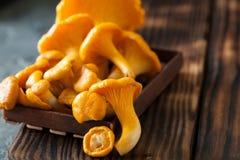 Galletti selvatici crudi dei funghi su fondo di legno Fotografia Stock