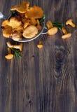 Galletti in setaccio Fotografie Stock