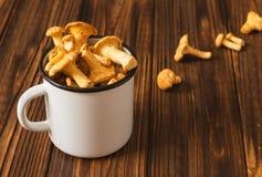 Galletto commestibile fresco dei funghi in una tazza del metallo bianco Fotografia Stock Libera da Diritti