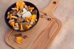 Galletto commestibile, porcino e taglio dei funghi del bordo di legno Fotografie Stock Libere da Diritti