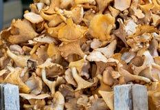 Galletto dei funghi attaccato per la vendita su un mercato Frutta di autunno Fondo immagini stock libere da diritti