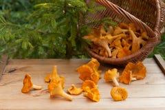 Galletto del fungo sulla Tabella di legno Fotografie Stock