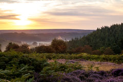 Galley sunrise. North yorkshire pine forest as the sun began to rise Royalty Free Stock Photos