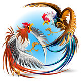 Galli di combattimento di combattimento di galli Immagini Stock Libere da Diritti