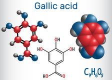 Gallic acid trihydroxybenzoic acid molecule, is phenolic acid,. Found in gallnuts, sumac, witch hazel, tea leaves and oak bark. Structural chemical formula and Royalty Free Stock Image