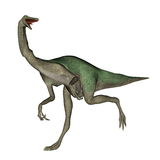 Gallimimus dinosaur walking - 3D render Stock Photo