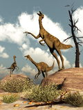 Gallimimus dinosaurs - 3D render Royalty Free Stock Photo