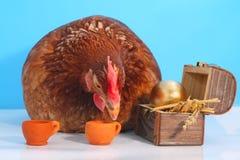 Gallina de Brown con el huevo de Pascua de oro Imagen de archivo libre de regalías