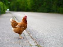 Gallina del pollo en el camino Imagenes de archivo