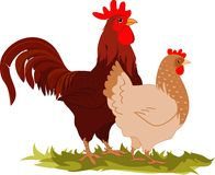 Gallina y gallo libre illustration