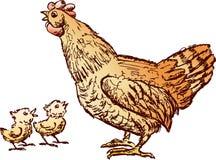 Gallina y pollos Imágenes de archivo libres de regalías