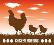 Gallina y pollos Foto de archivo