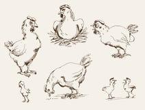 Gallina y polluelos Imagenes de archivo
