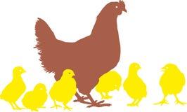 Gallina y polluelos Imágenes de archivo libres de regalías