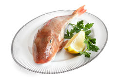 Gallinella di mare- tub gurnard Stock Photos