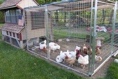 Gallinero de pollo Imagenes de archivo