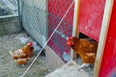 Gallinero de pollo Fotografía de archivo libre de regalías