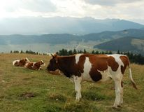 Gallio common plateau of Asiago in the province of Vicenza Royalty Free Stock Photo