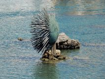 Gallipoli - Hedgehog in the harbor Stock Image