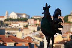 Gallo Foto de archivo libre de regalías