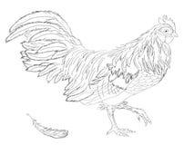Gallo Anno del gallo Nuovo anno cinese del gallo Immagine Stock