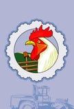 Gallo bianco Immagine Stock