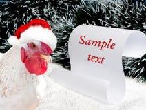 Gallo blanco en el ` rojo s de Papá Noel del sombrero Foto de archivo
