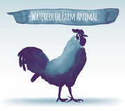 Gallo dell'acquerello Fotografie Stock Libere da Diritti
