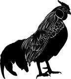Gallo dell'uccello dell'agricoltore Gallo dell'uccello Vettore nero della siluetta del gallo isolato su fondo bianco Fotografia Stock Libera da Diritti