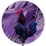 Gallo di canto del collage di arte contemporanea nel grande fondo porpora delle foglie di palma Concetto moderno della cultura di immagini stock