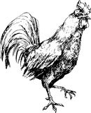 Gallo disegnato a mano Fotografia Stock