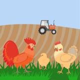 Gallo e polli sul bacgroung di paesaggio rurale Fotografie Stock
