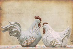 Gallo e una gallina fotografia stock