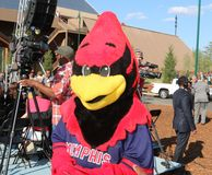 Gallo el Redbird en la gran inauguración Memphis Tennessee de Bass Pro Shop Fotografía de archivo libre de regalías