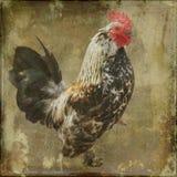 Gallo en textura Fotografía de archivo