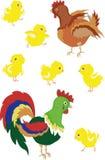 Gallo, gallina, polluelos Fotos de archivo