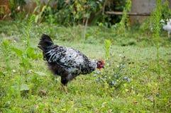 Gallo o gallina como símbolo del Año Nuevo Foto de archivo