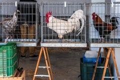 Gallo para la venta en mercado famoso de los granjeros en Sineu, Majorca Fotografía de archivo libre de regalías