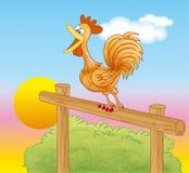 Gallo que canta en el amanecer Fotografía de archivo libre de regalías