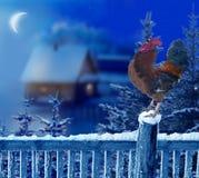 Gallo que se coloca en paisaje de la Navidad del invierno Símbolo del nuevo sí Foto de archivo libre de regalías