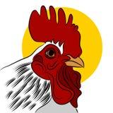 Gallo rojo Imágenes de archivo libres de regalías