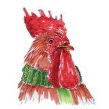 Gallo rojo Foto de archivo libre de regalías