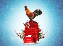 Gallo rojo hermoso Fotos de archivo